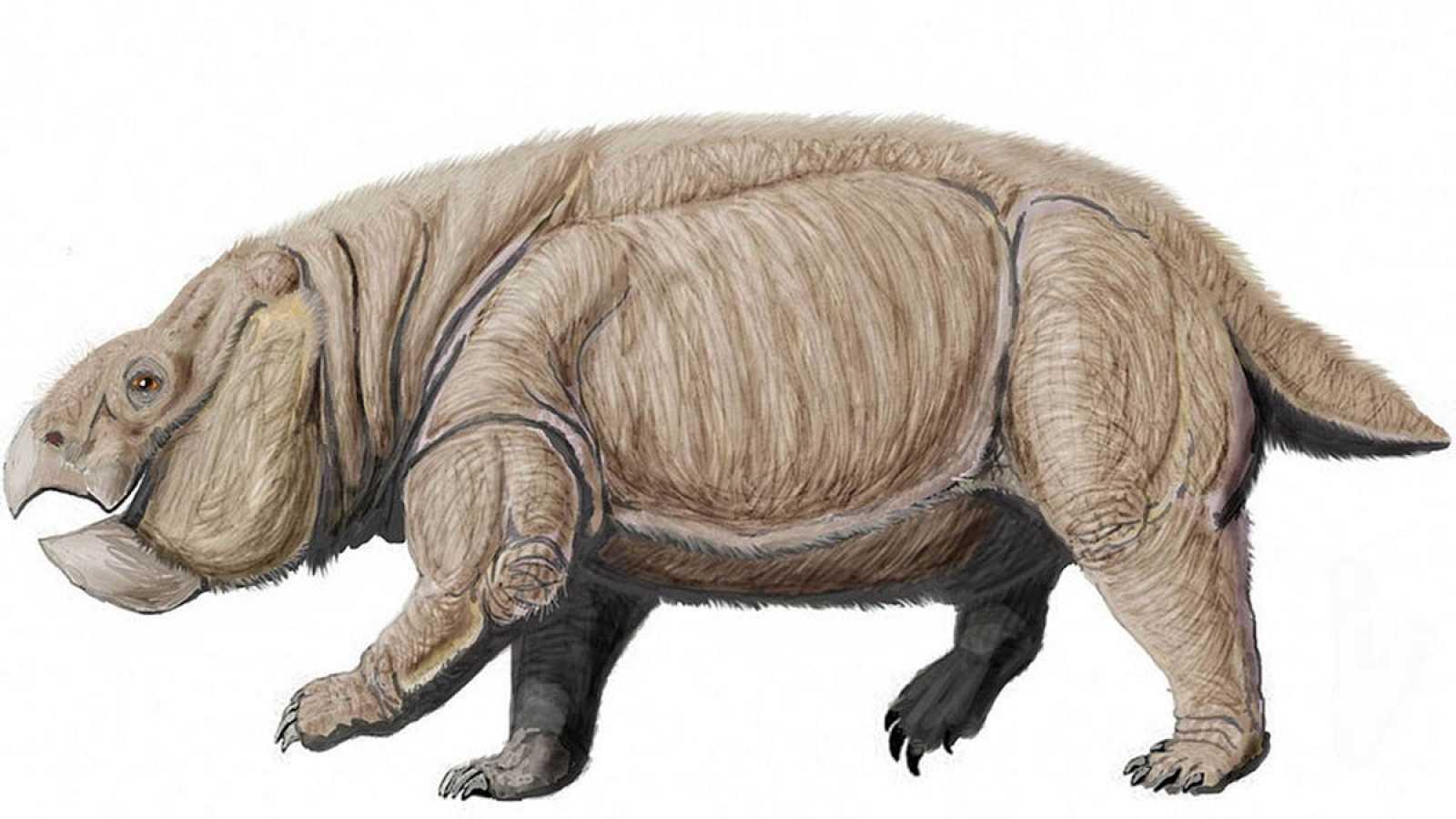 Descubuertos restos de un dicinodonte que es el ancestro más antiguo de todos los mamíferos | EL FRENTE