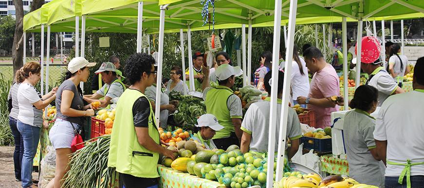 El 3 de febrero arranca mercado  campesino en Parque de los Sueños  | Metro | EL FRENTE