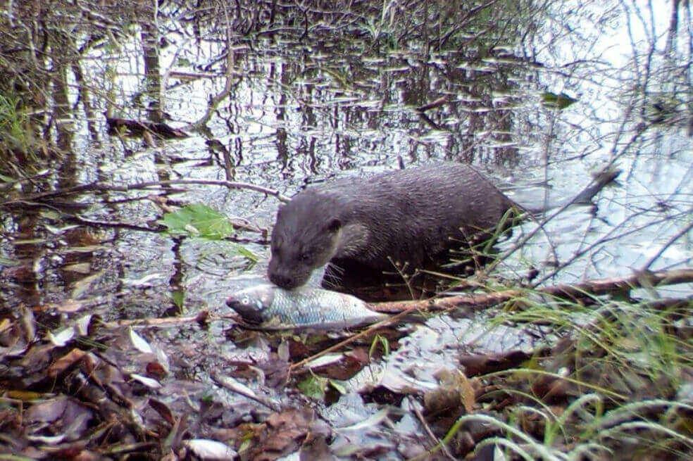 Encuentran animales en el área prohibida de Chernobyl | EL FRENTE