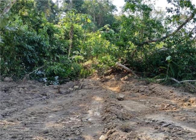 Ciudadanos denuncian tala masiva de árboles en Sabana de Torres, Santander | EL FRENTE