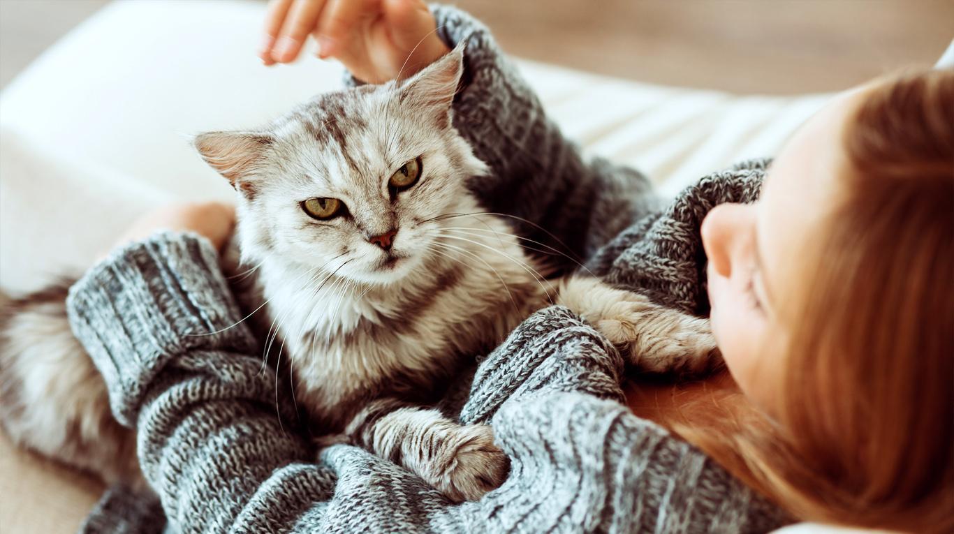 Relacionan parásito con la esquizofrenia. Los gatos culpables de la enfermedad  | Entretenimiento | Variedades | EL FRENTE