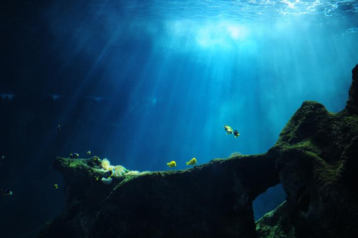 Descubren nueva amenaza para el calentamiento global en las profundidades del mar | EL FRENTE