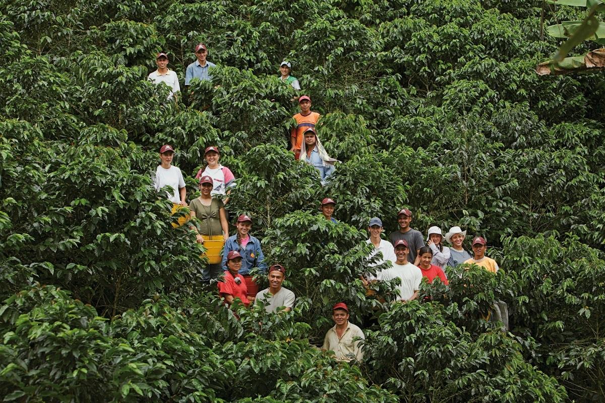 Un anuncio tranquilizador del Banco Agrario. Les lanzará un salvavidas a los productores cafeteros | EL FRENTE