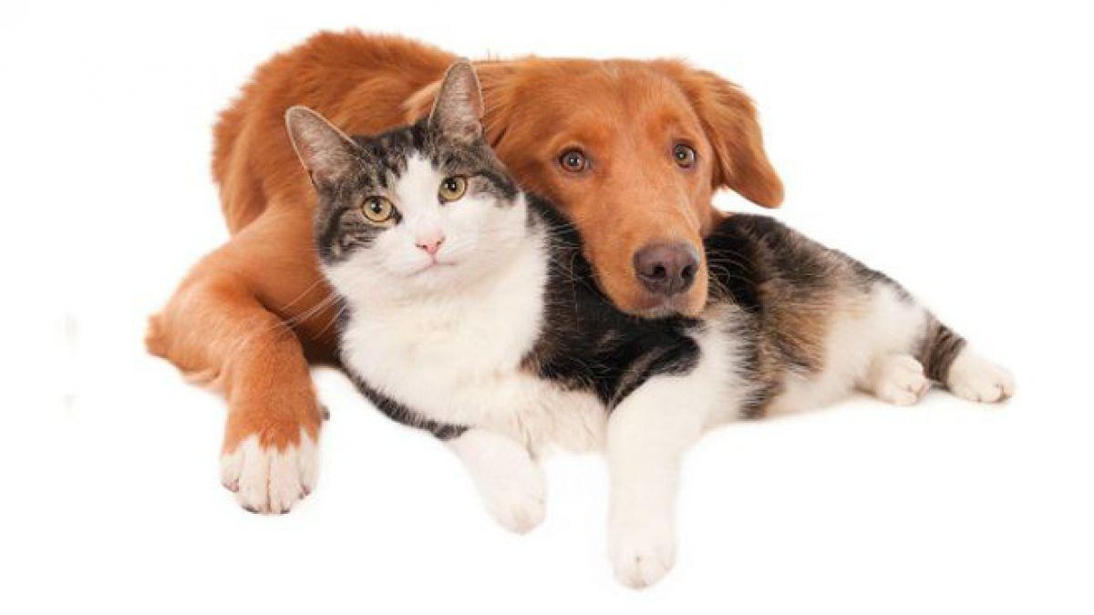 Nuevo virus de influenza con potencia mortal. Perros y gatos pueden transmitirlo a los humanos | EL FRENTE