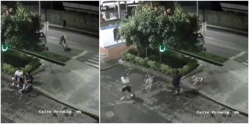Hombre soltó a su perro pitbull para atacar a dos personas. ¿Fue deliberado?    EL FRENTE