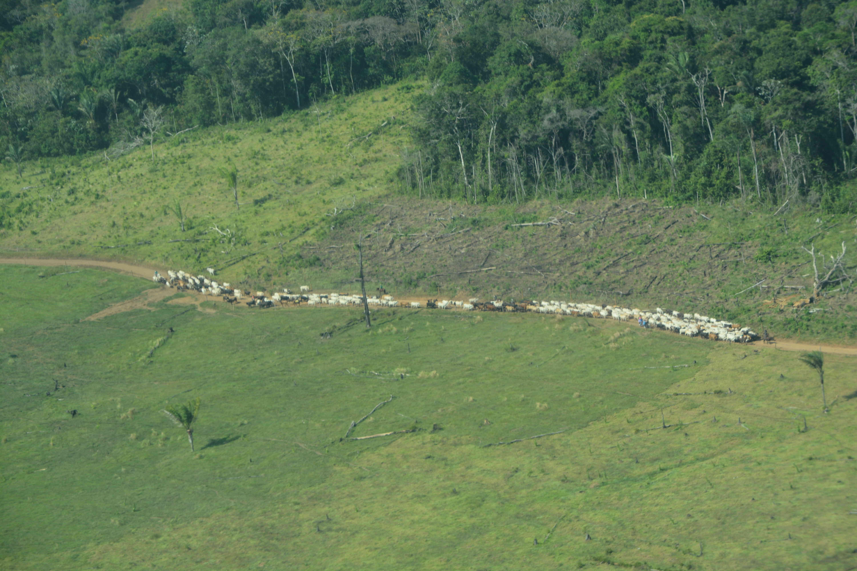 Meten un enorme mico en el PND para favorecer a los ladrones de las tierras del Estado    EL FRENTE