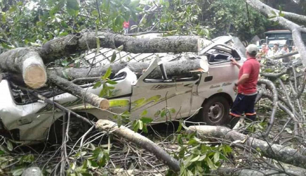 Cinco muertos y varios heridos dejó la caída de un árbol en la vía Ocaña - Catatumbo | Justicia | EL FRENTE