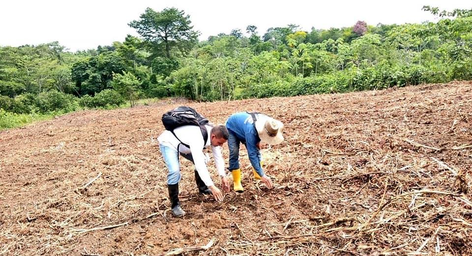 BREVES PORTEÑAS: Terrenos listos para sembrar | EL FRENTE