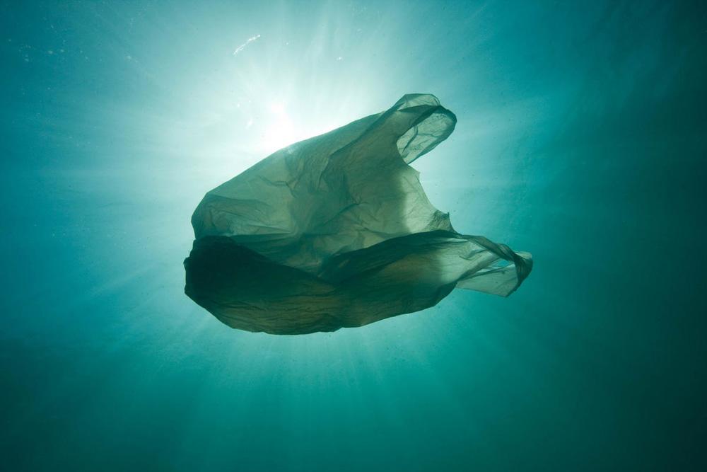 Científicos llegaron a 10 mil metros de profundidad: encontraron basura | EL FRENTE