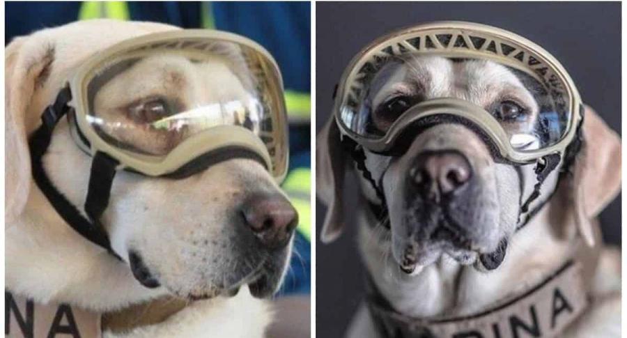 Una perra rescatista ícono en México fue jubilada   Mundo   EL FRENTE