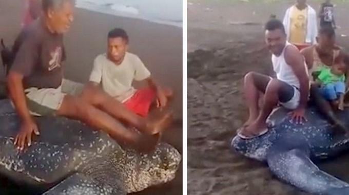 Video. Juegan sobre una tortuga en vía de extinción | EL FRENTE
