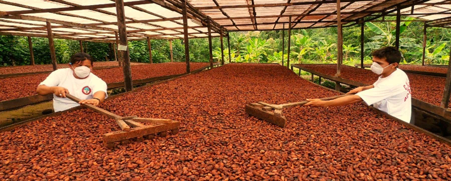 Concurso Cacao de Oro incentiva la producción de cacao tipo exportación en Santander | EL FRENTE