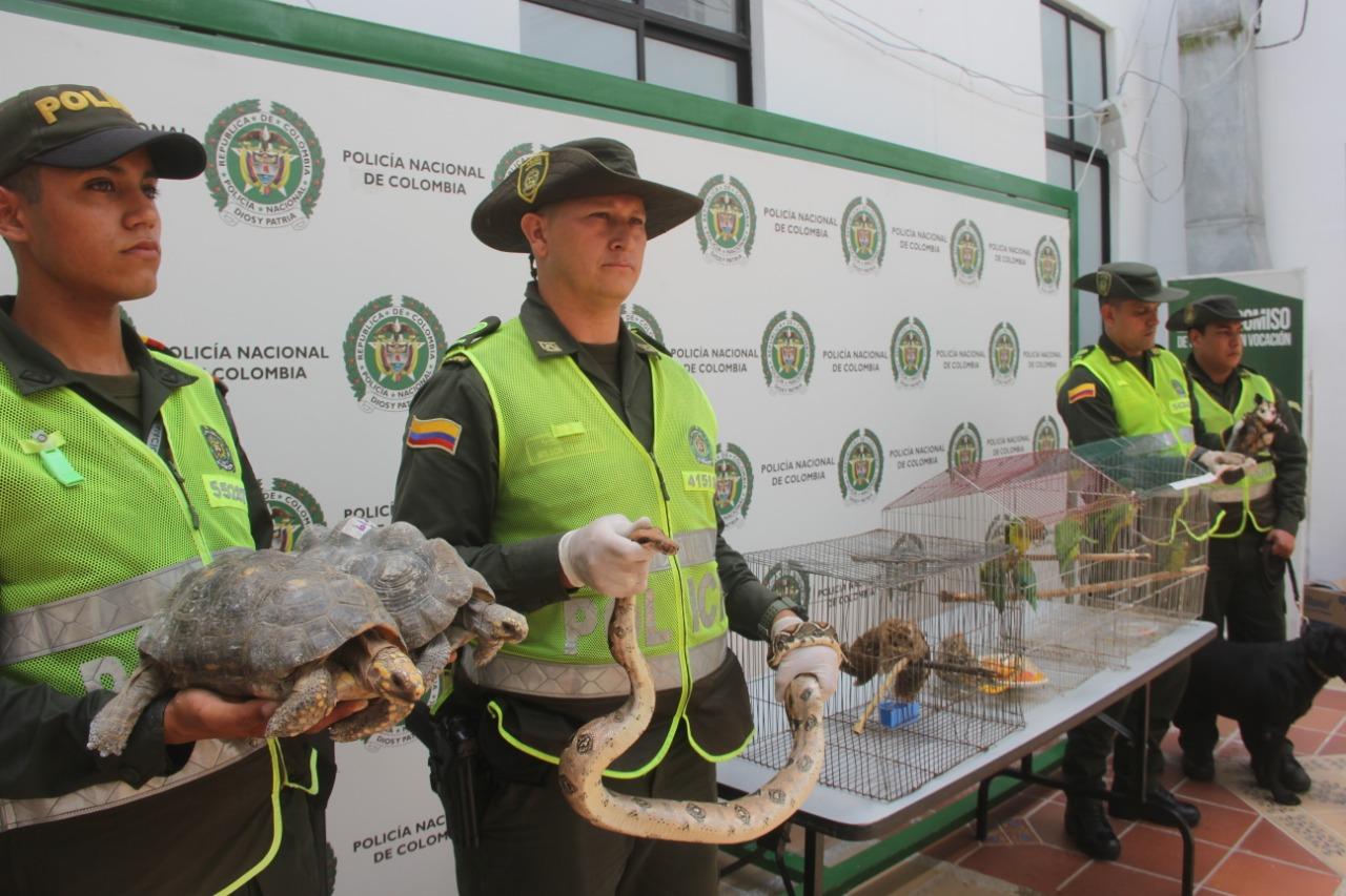 792 especies silvestres han sido rescatadas por la Policía Nacional   EL FRENTE