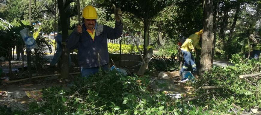 Inician trabajos para manejo integral de componente arbóreo    EL FRENTE