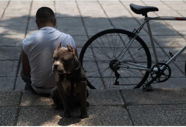 Perro de raza Pitbull atacó a niño de 5 años desprendiéndole su cuero cabelludo | EL FRENTE
