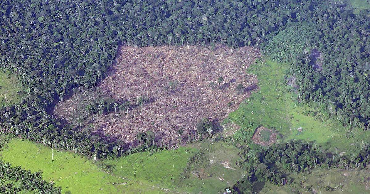 Más de un millón de hectáreas se han deforestado en Colombia | Colombia | EL FRENTE