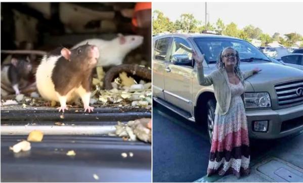 Mujer que vivía con 300 ratas en su camioneta fue obligada a darlas en adopción | Mundo | EL FRENTE