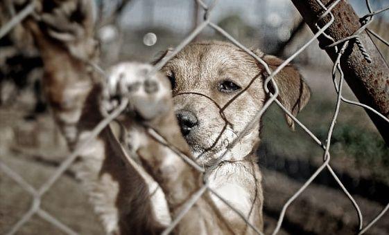 Crean grupo especial para combatir el maltrato animal en Colombia  | Nacionales | Colombia | EL FRENTE