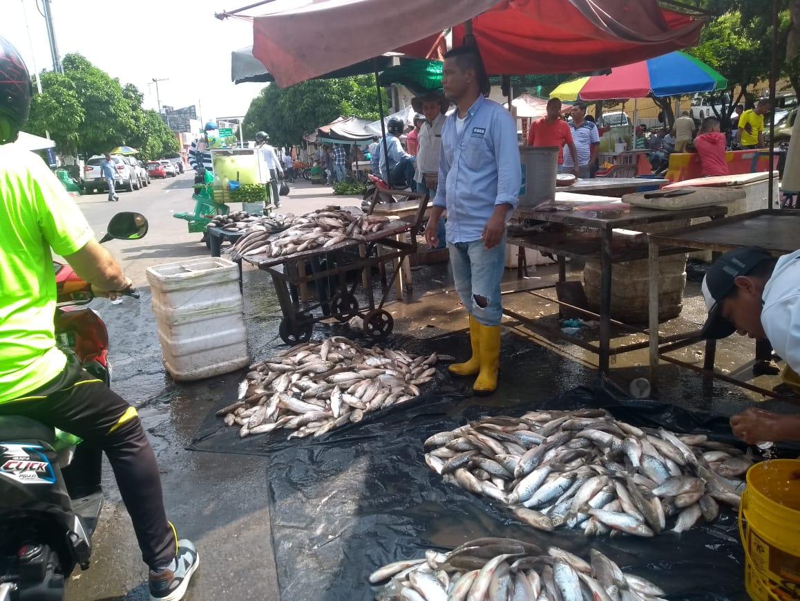 Por subienda se oferta pescado desde 300 pesos y se multiplican ingresos en el Puerto Petrolero | EL FRENTE