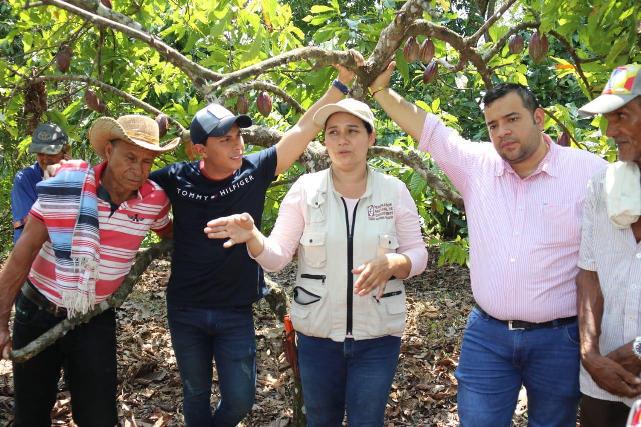 Barrancabermeja y su cacao de clase internacional. Único fruto en el mundo 100 % tipo exportación   EL FRENTE
