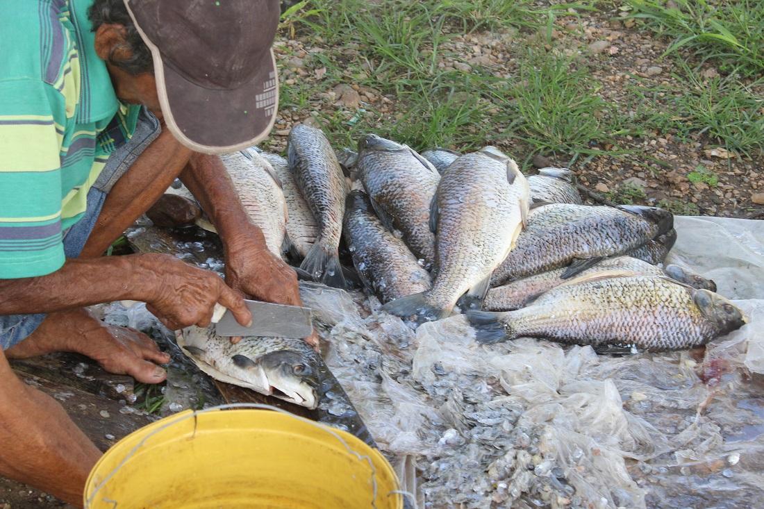 investigadores UPB retoman la pesca artesanal como modo de vida en El Llanito, Barrancabermeja | EL FRENTE