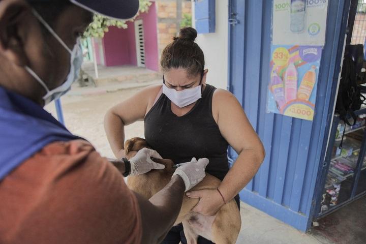 Beneficio para más de 2.000 mascotas en Barrancabermeja. Avanza la campaña de vacunación antirrábica | EL FRENTE