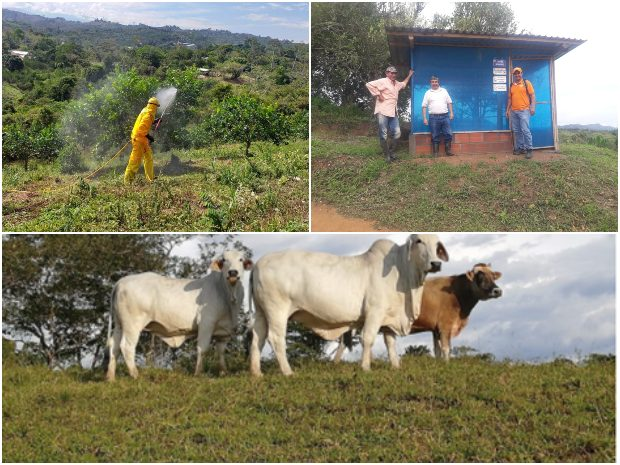 Participación santandereana. El ICA realizó reunión virtual en buenas prácticas agropecuarias | EL FRENTE