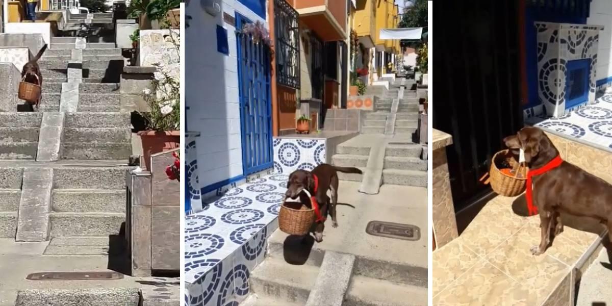 Le robaron la canasta un perro que entrega domicilios | EL FRENTE