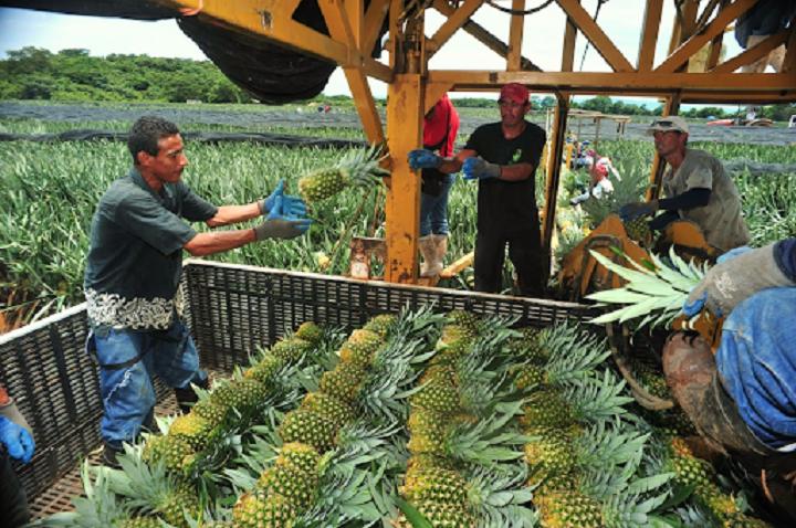 Segundo mes de recuperación en exportaciones. Dane reporta que en junio sumaron US$ 2.278,1 millones | EL FRENTE