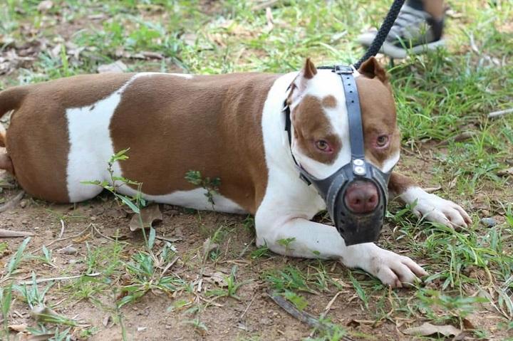 Tenencia de mascotas segura en el Distrito. Iniciará censo a caninos considerados peligrosos | EL FRENTE