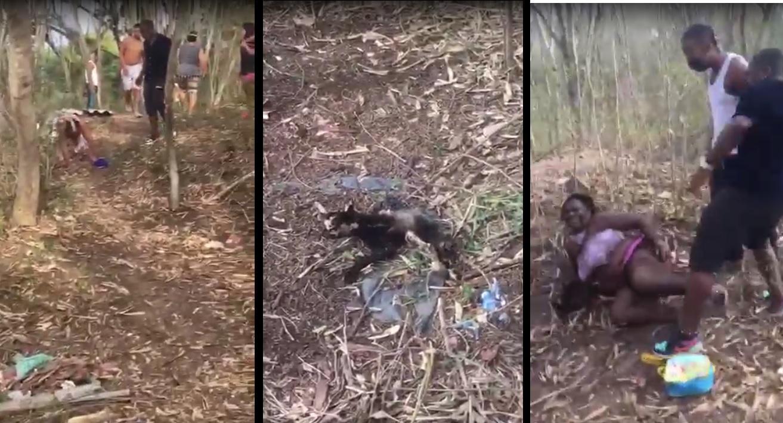 VIDEO: Supuestamente, mataban los gatos para rituales de brujería  | Nacionales | Colombia | EL FRENTE