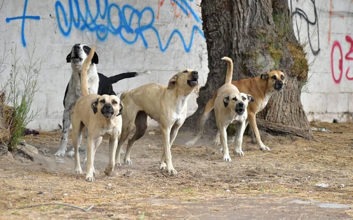 Jauría de perros asesino a una mujer | Mundo | EL FRENTE