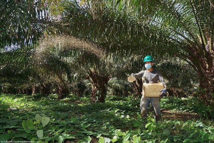 Congreso virtual de palmicultores. Afrontar desde la agroindustria la Covid-19 y cambio climático | EL FRENTE