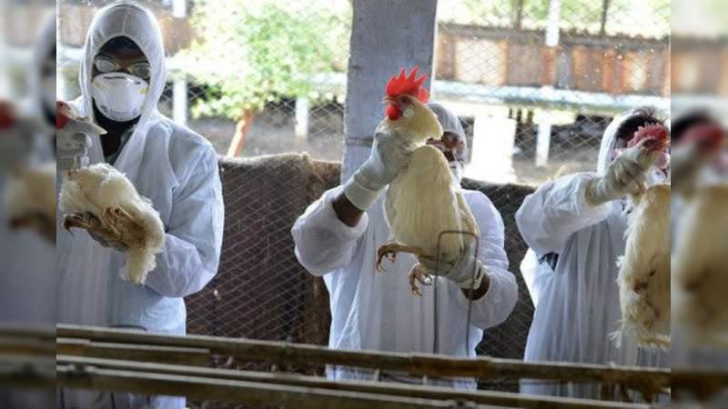 Rusia detecta primer caso gripe aviar H5N8 en un ser humano | EL FRENTE