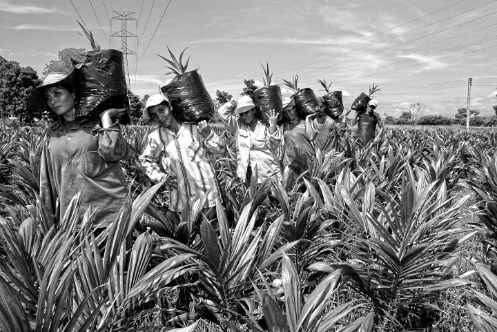 Fedepalma destaca rol femenino en la palmicultura con el Premio Mujer Palmera 2021 | EL FRENTE