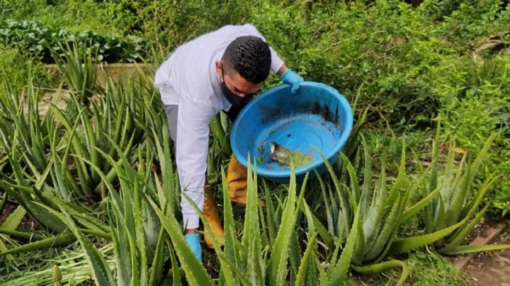UPB amigable con el medio ambiente y sus alternativas naturales para control de plagas | EL FRENTE
