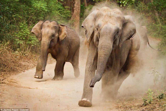 Cazador muere pisoteado por elefantes en Sudáfrica | Noticias | Mundo | EL FRENTE