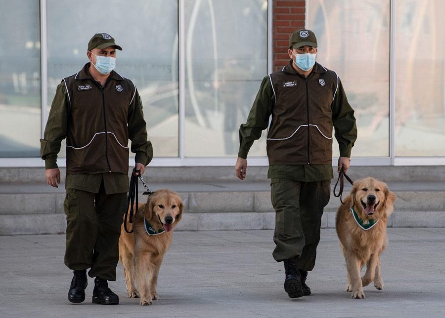 Aeropuertos de El Salvador con perros para detectar Covid-19  | EL FRENTE