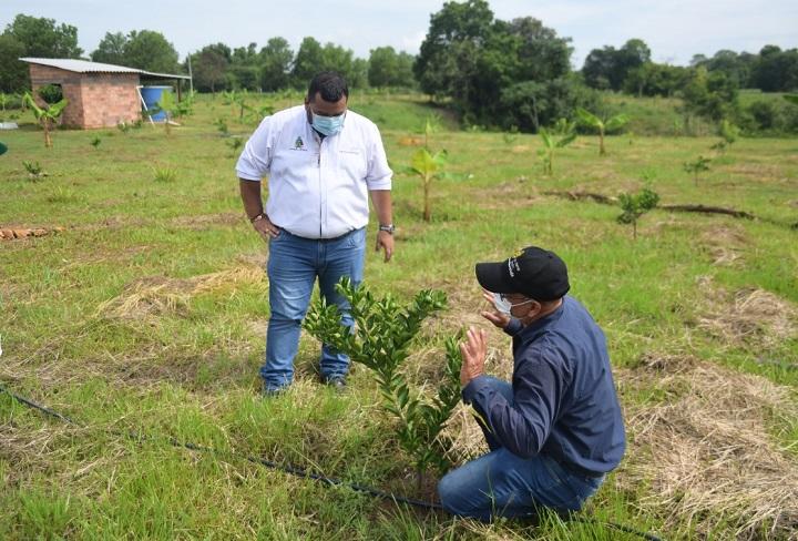 Secretaría de Agricultura de Barrancabermeja hace avances con variedades de cítricos y mango | Municipios | Santander | EL FRENTE
