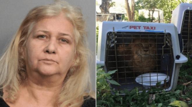 """Cárcel para """"salvadora"""" de gatos que los mataba de hambre    EL FRENTE"""