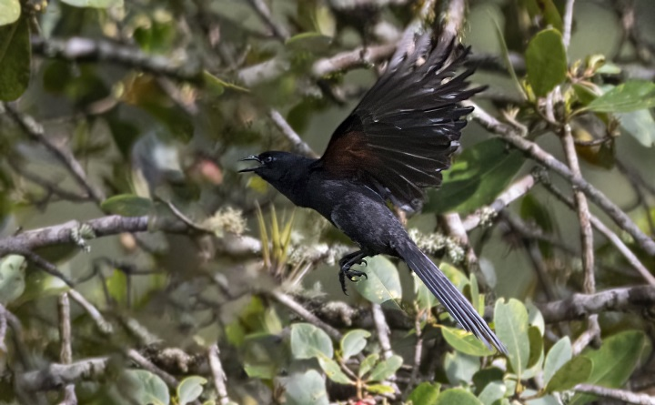 Megaproyecto turístico de avistamiento de aves para promocionar a Santader ante el mundo | EL FRENTE
