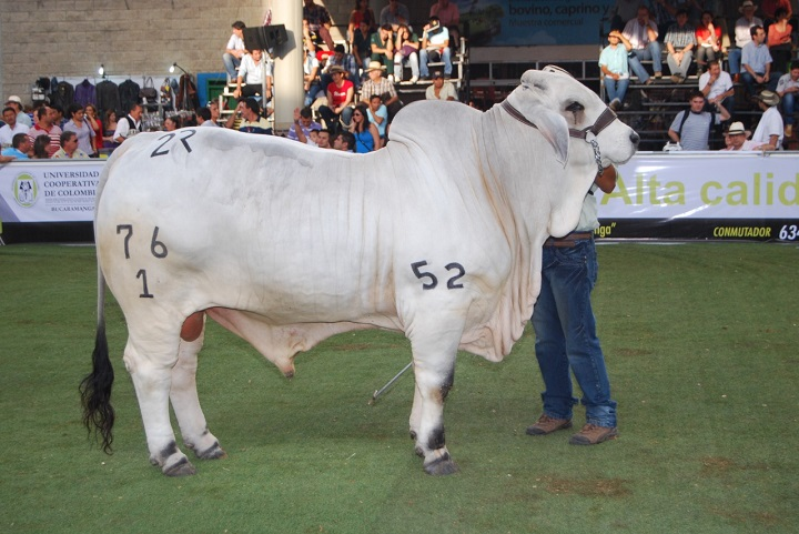 Uruguay mostrará por qué es gran exportador de carne durante la Feria de Ganadera de Bucarmanga | EL FRENTE