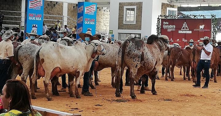 Superadas las expectativas en la Feria Ganadera de Bucaramanga con aporte a reactivación económica | Local | Economía | EL FRENTE