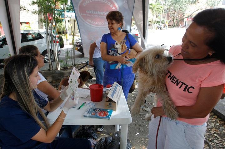 Perros y gatos se van de chuzada en Santander por Día Mundial Contra la Rabia este 28 de septiembre | Santander | EL FRENTE