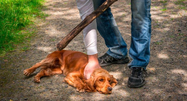 Cruel venganza: despellejó el perro de su vecina tras una discusión  | EL FRENTE
