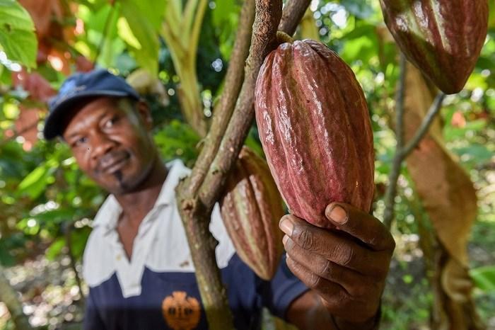 Crean paquete de alivios para el sector agrario | EL FRENTE