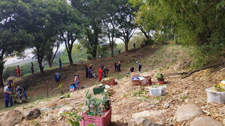 Sembrados 300 árboles en Bucaramanga. La UIS promueve la responsabilidad ambiental | EL FRENTE