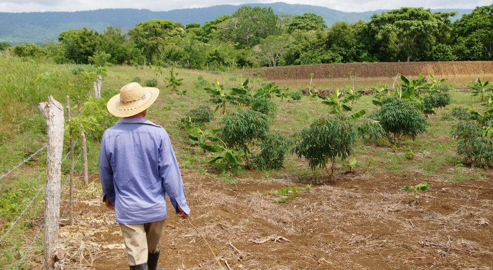 Familia de Simacota, desplazada por los paramilitares, recuperó sus tierras | EL FRENTE