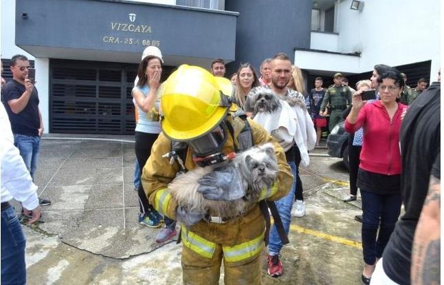 Perros atrapados en incendio generaron angustioso rescate  | EL FRENTE