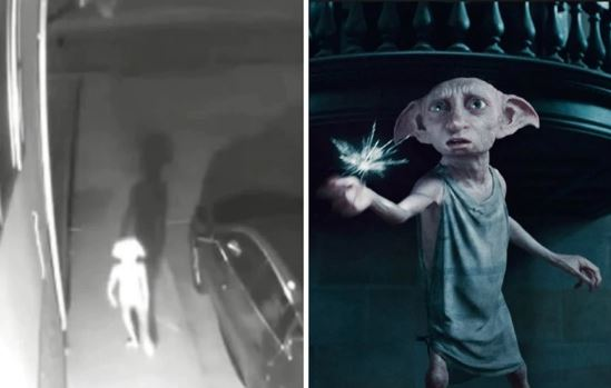 Viral. Video captó extraña criatura idéntica a Dobby, el elfo de Harry Potter | EL FRENTE